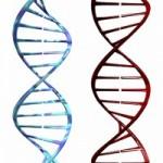 DNA-200x300