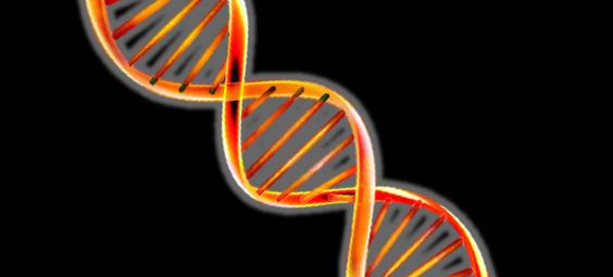 genetics vitamin A retinol conversion thyroid digestion, bcom1 gene